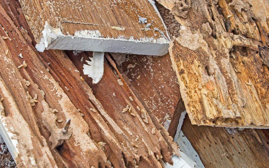 """""""Las termitas, eliminación definitiva"""""""