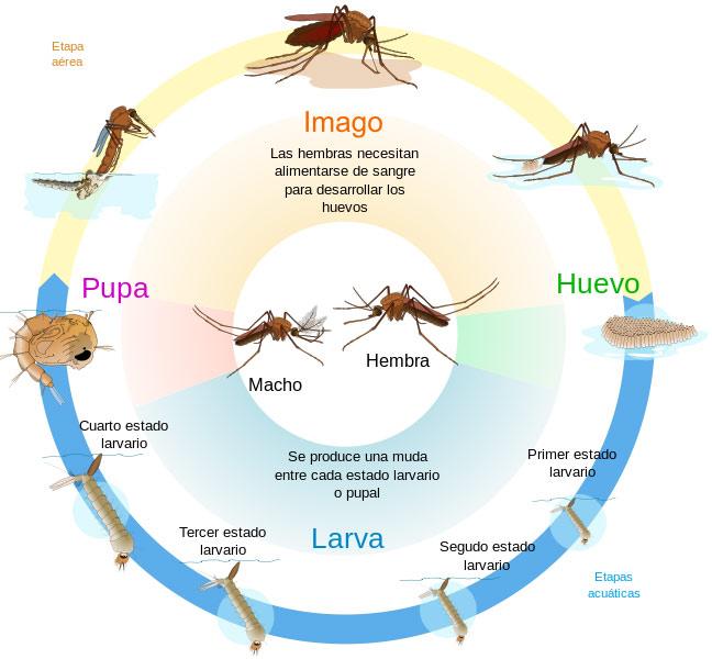 Programa de Control de Moscas y Mosquitos usando Larvicidas.