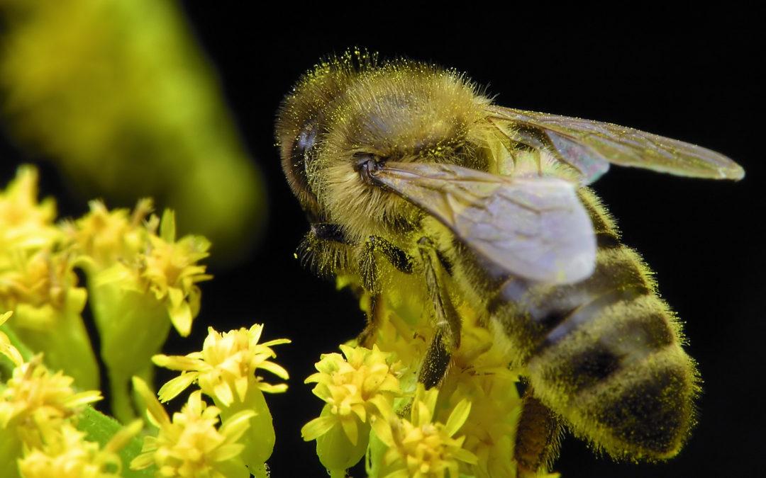 """Una veterinaria """"rara"""" que se dedica a las abejas"""