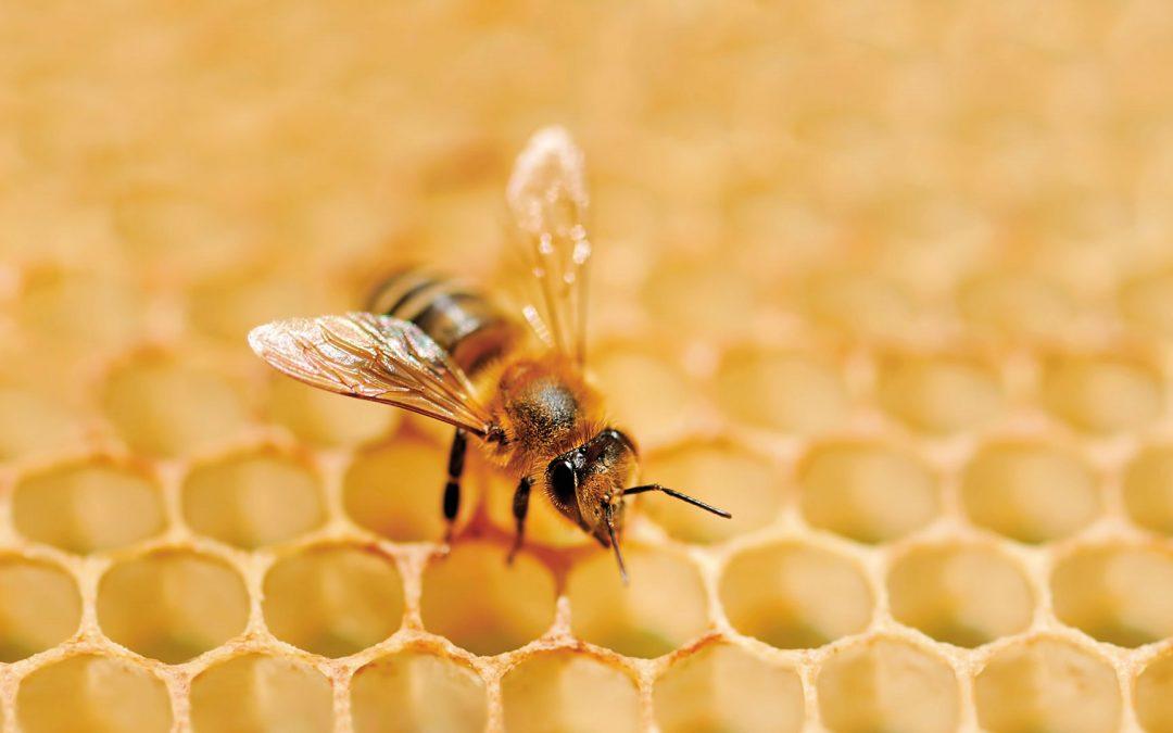 Síndrome de despoblamiento de las colmenas