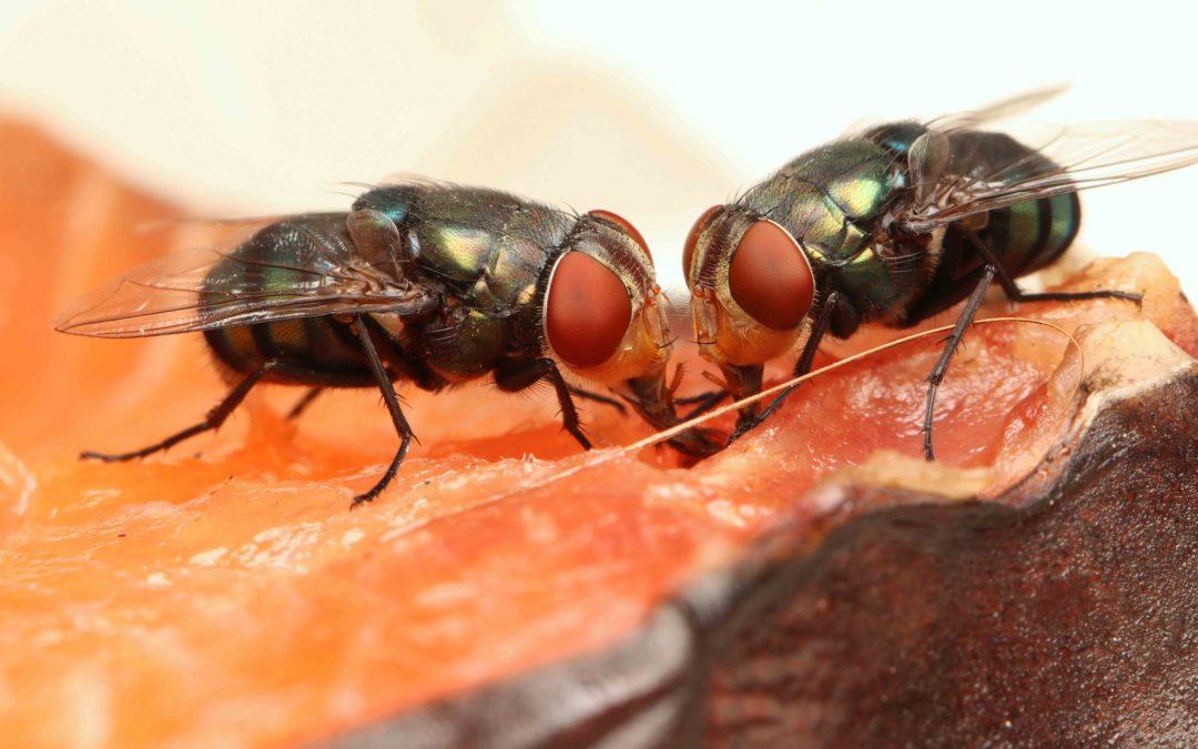 Control de insectos voladores en el sector alimentario