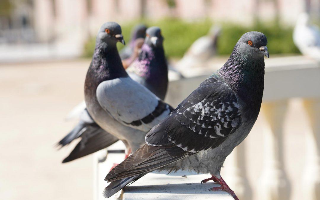 Control de aves: una necesidad en industria alimentaria y espacios urbanos.