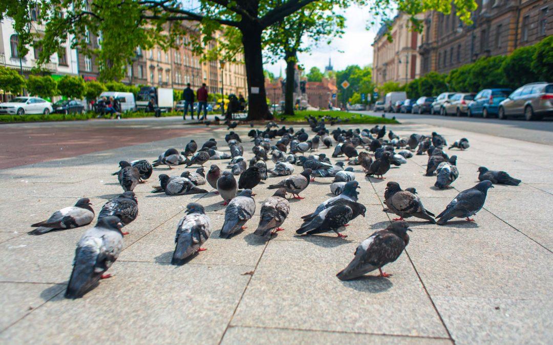 Control de aves en el Ayuntamiento de Fraga